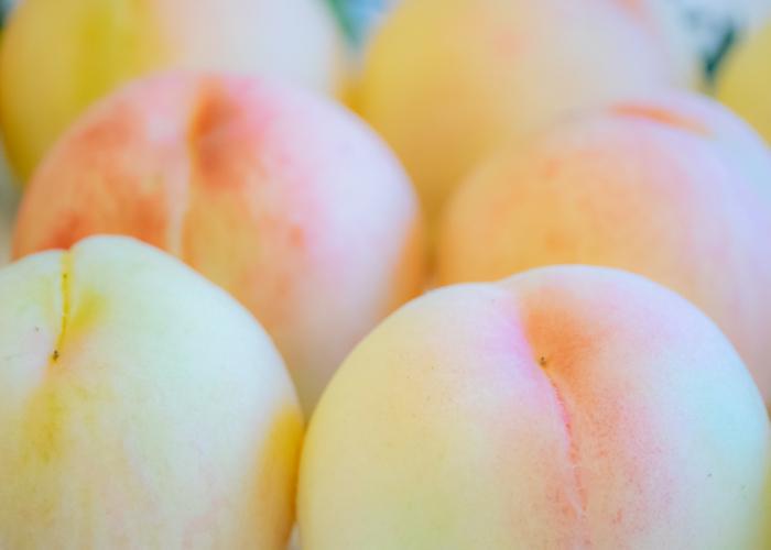 Close-up of pristine Shimizu white peaches