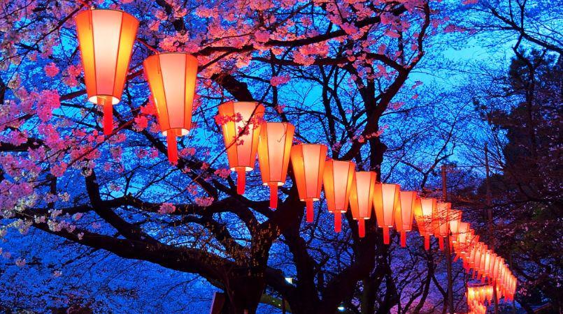 Cherry Festival 2020.Cherry Blossom Festival Evening In Nakameguro 2020