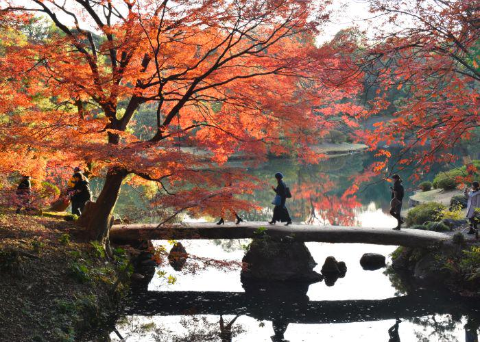 An image of people walking over a flat stone bridge above a pond, with orange trees on either side
