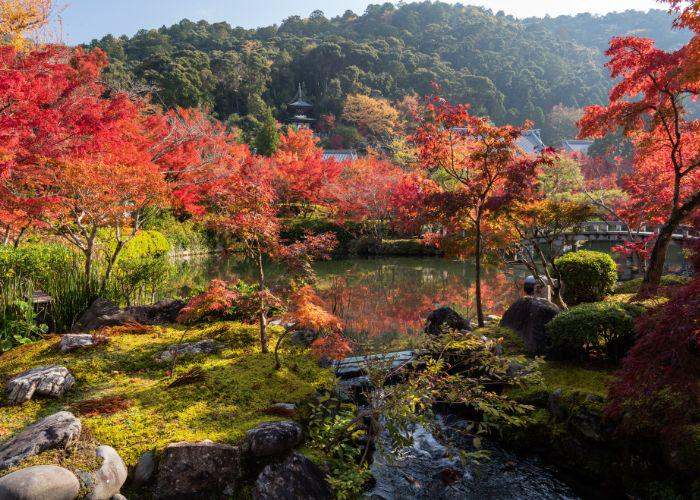An image of Eikando's garden, with red trees and a pagoda in the background