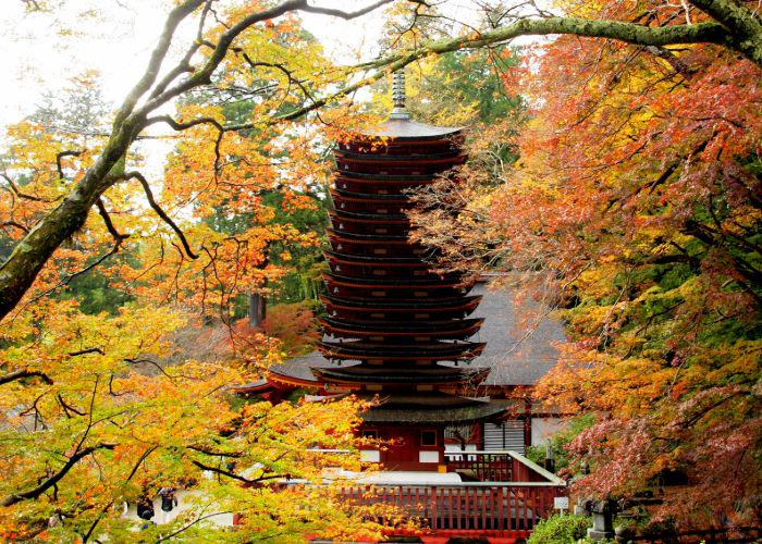 A 13-storied pagoda surrounded by autumn trees