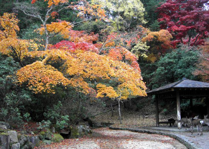A wooden structure and some deer surrounded by red, yellow and orange trees