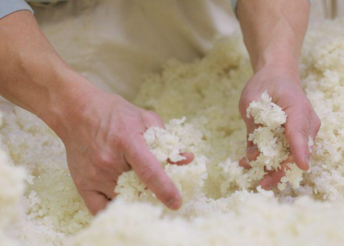Sake making, the Koji inoculation