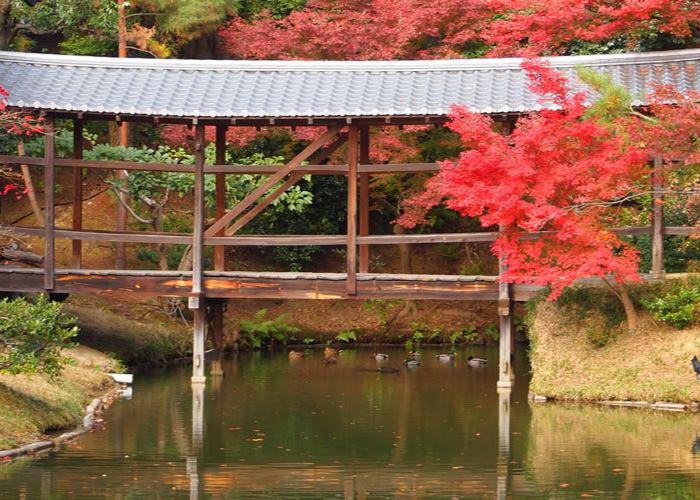 A bridge surrounded by bright red trees, autumn at Kodaiji Temple