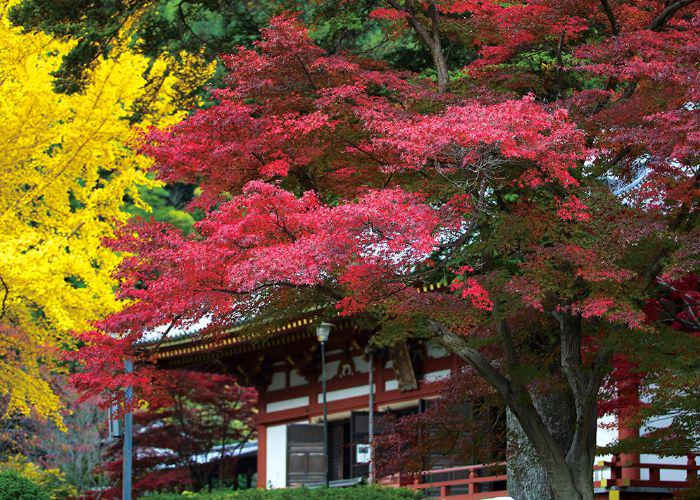 A red shrine surrounded by yellow and red autumn leaves for the Momiji Festival