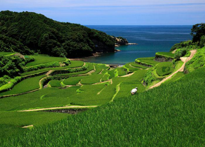 Light blue sky, deep blue waters, densely forested mountains, and stunning rows and rows of Japanese rice fields