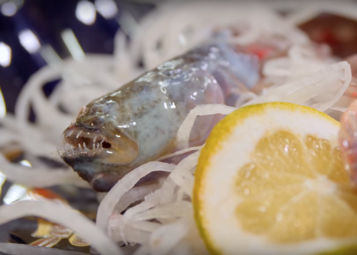 An image of of a warasubo fish sat on a bed of onions with a lemon next to it zoomed in on it's face that has small pointy teeth