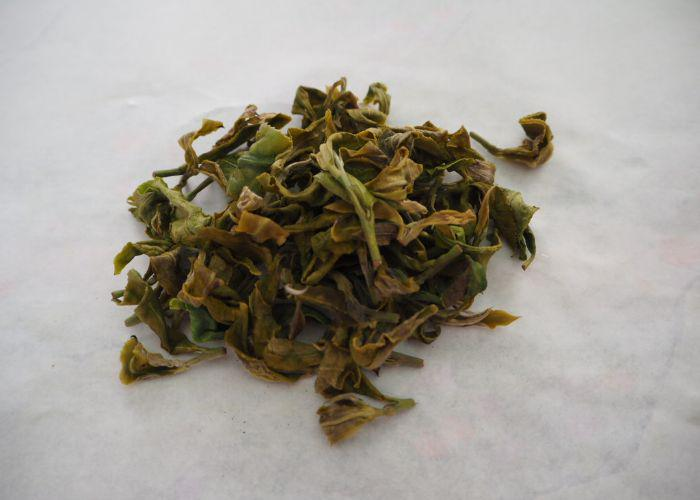 A close up on green tea leaves after hand rolling phase three