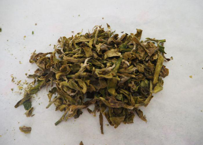 A close up shot of green tea leaves having been dried and hand rolled four times