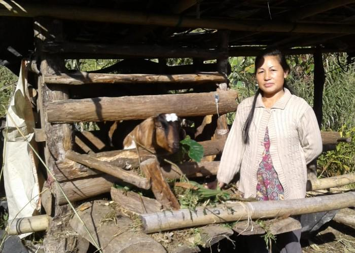 A woman stands outside a picked area, with her livestock