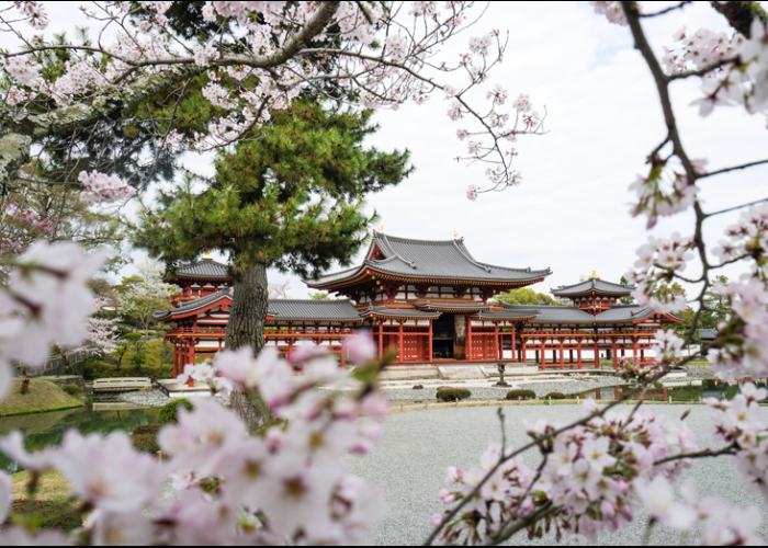 The impressive red Byodoin Temple in Kyoto, framed by blooming cherry blossoms