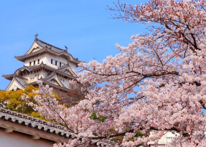 Osaka Castle surrounded by blooming cherry blossom