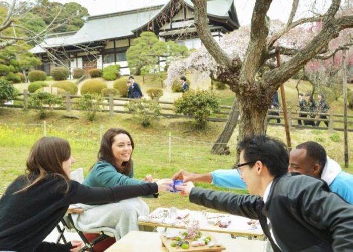 Hanami picnic at shrine in Miyagi, people clink their sake classes under the blooming cherry blossoms