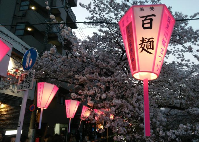 Pink lanterns and cherry blossoms along the Meguro River
