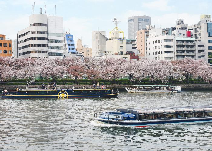 Yodo River with steam boat replicas and blossomed sakura cherry trees at ots banks