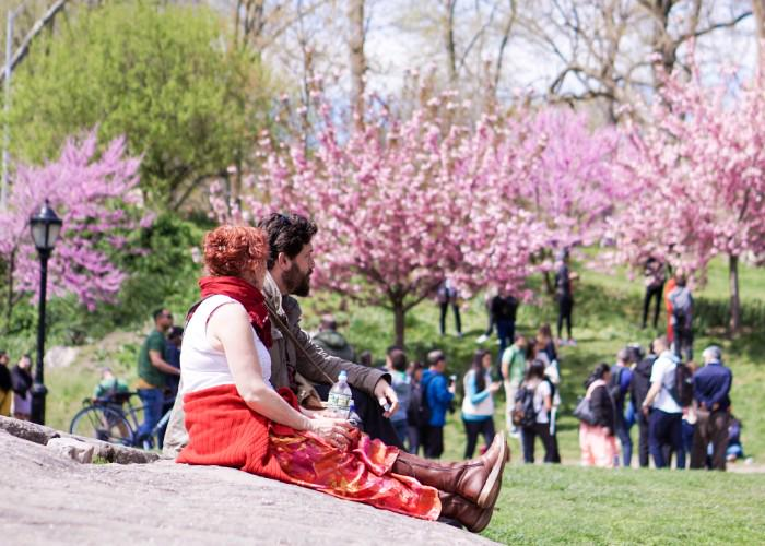 A couple sits at a cherry blossom picnic spot, gazing at the blooming trees