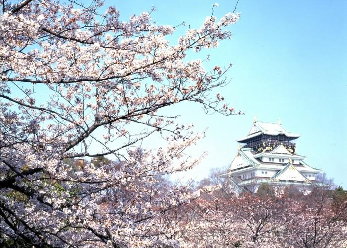 Osaka Castle surrounded by blooming cherry blossoms