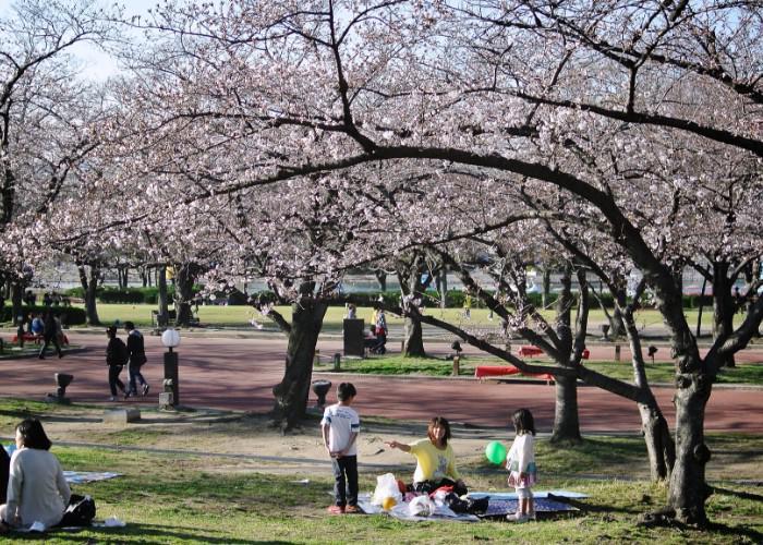 Hanami picnic spot at the Osaka Expo '70 Commemorative Park