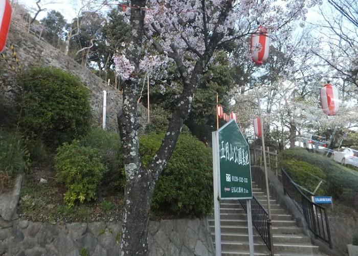 Satsukiyama Park cherry blossom viewing spot in Osaka with hanging lanterns and blooming pink sakura