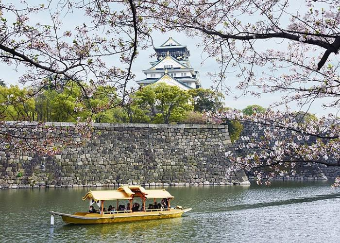 Osaka cherry blossom viewing spot from the Osaka Water Taxi, showing Osaka Castle surrounded by cherry blossom trees