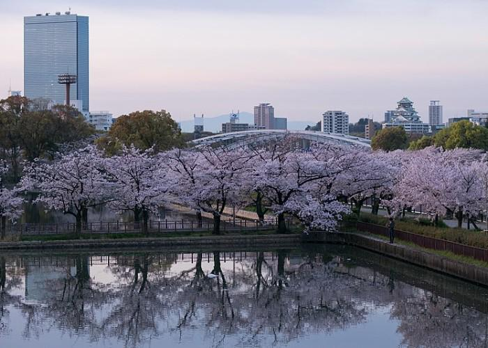 Cherry Blossoms at Kema Sakuranomiya Park, reflected in the water, with Osaka Castle in the background