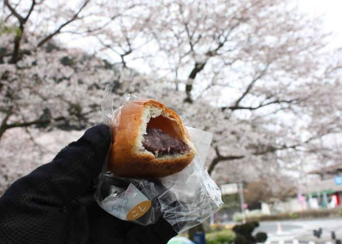 Cross-section of an anpan revealing the sweet red bean inside, against a backdrop of cherry blossom trees at the park