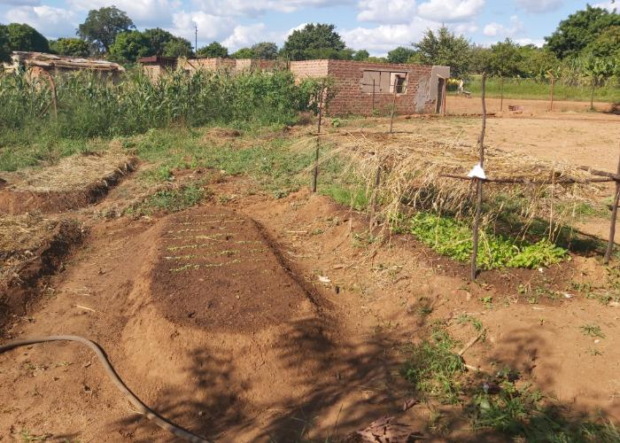 Food for Happiness Sustainable Vegetable Garden Patch in South Africa